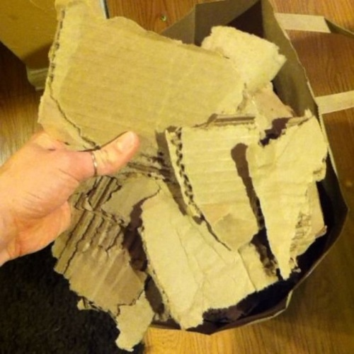 cardboard is a necessary ingredient for building your own worm bin