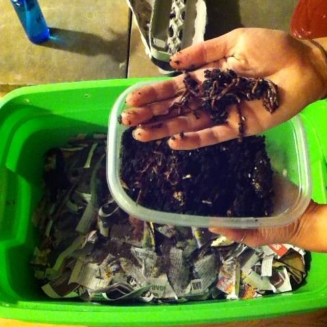with worm bins make for nutrient rich soil
